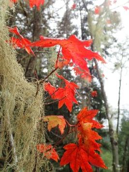 Is it fall already?!