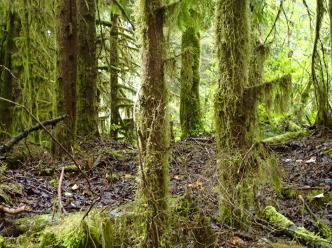 Moss covered trees.