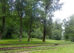 Train tracks in Wilkeson.